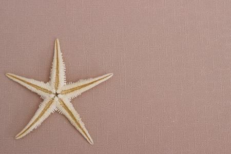 estrella de mar: Fondo de verano: las estrellas de mar en el fondo beige
