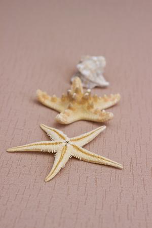 biege: Summer background: starfish on the biege background
