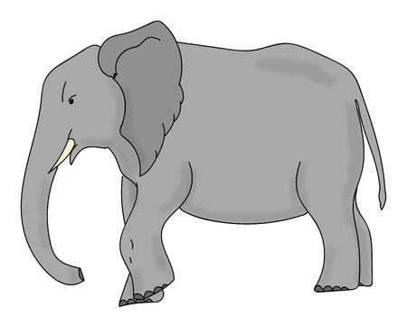 asian elephant: Vector Illustration on an Asian elephant