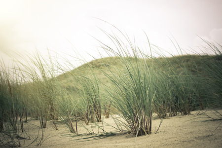 water s edge: View of Dead Dunes, Curonian Spit and Curonian Lagoon, Nagliai, Nida, Klaipeda, Lithuania. Baltic Dunes.