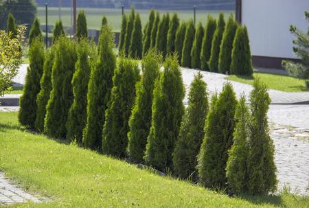 よく小さな石、生け垣、緑の芝生のパスと庭園を維持