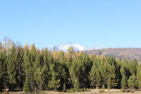 dense: Dense coniferous forest