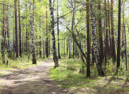 coolness: Forest coolness