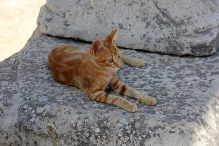 Feral cat on the stones of the ruins of Ancient Ephesus, Selcuk, zmir Province, Turkey Stock Photo