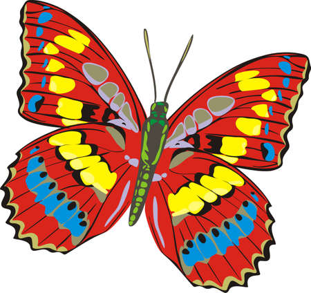 The beautiful butterfly Stock Vector - 8141992