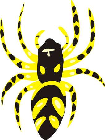 is poisonous: Poisonous spider