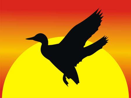 Flight of a duck Illustration