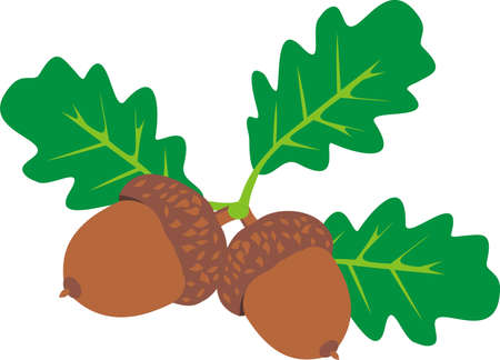 Ripe acorns Stock Vector - 9637155
