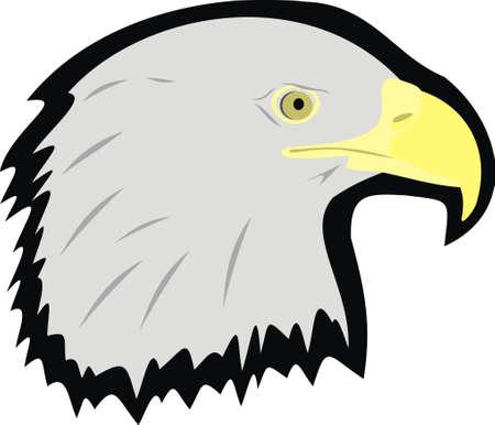 eagle head: Head of an eagle Illustration