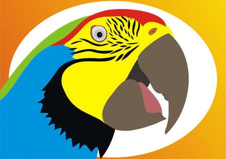 Parrot head Stock Vector - 9637164