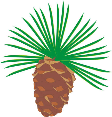 The cedar cone Illustration