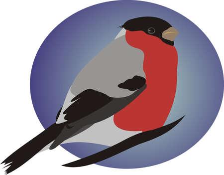 bullfinch: Beautiful bullfinch Illustration
