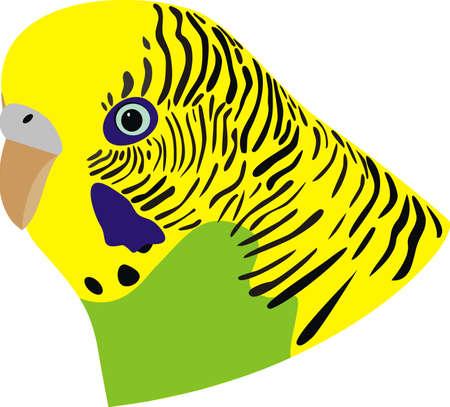 Wavy parrot Stock Vector - 9932482