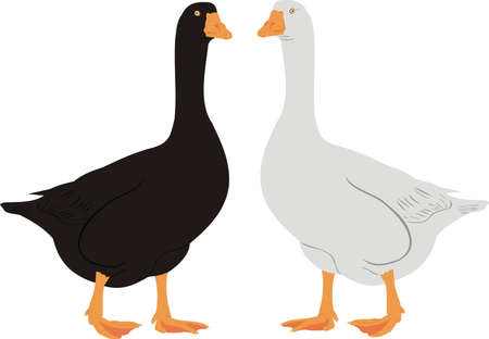 House geese Illustration