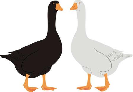 House geese Vector
