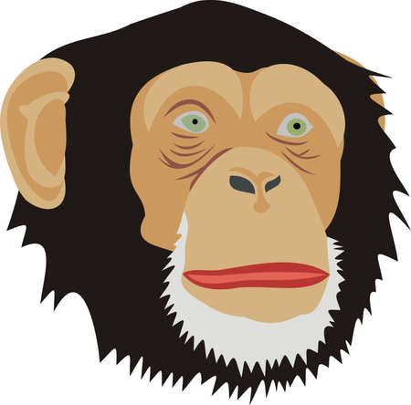 Head of a monkey Stock Vector - 10466271