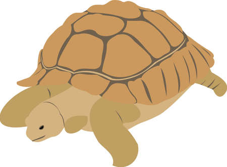 The big turtle Stock Vector - 10541403