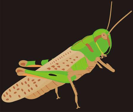 locust: The big locust