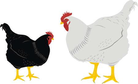 Zwei Hennen Illustration