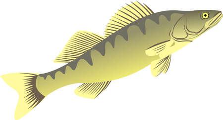 The big pike perch Illustration