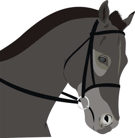 Head of a horse Vector