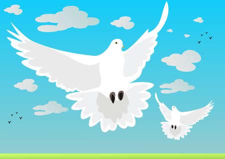 Pigeons Stock Vector - 17303529