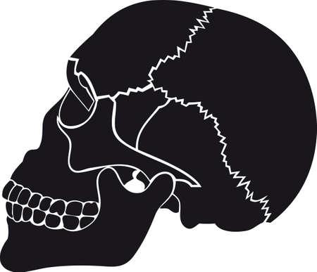 Old skull Illustration