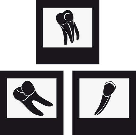 Teeth of the adult Illustration