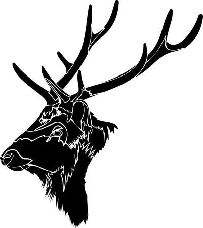 Head of a deer