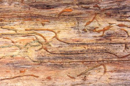 woody background bark beetle