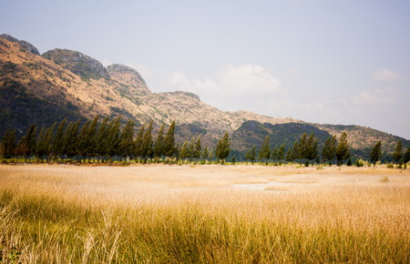 clearly: Pretty field with clearly sky and  beautiful  mountain background in the Sam Roi Yod National Park of Thailand.