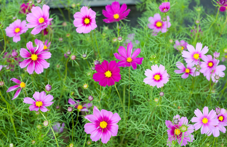 glitzy: Colorful small flowers  in the market. Stock Photo