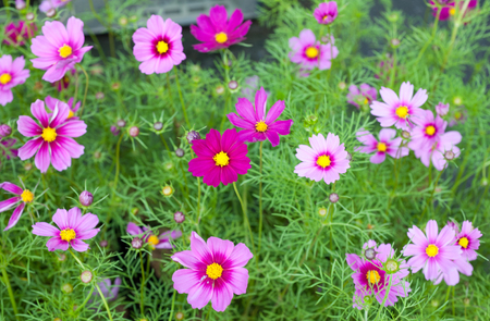 Colorful small flowers  in the market. Stock Photo