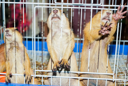 incarceration: The pity animals in the cage.