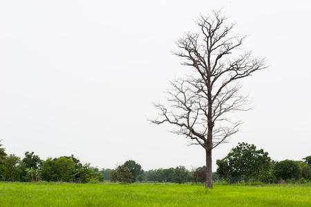 Died wooden in the fields in rural.