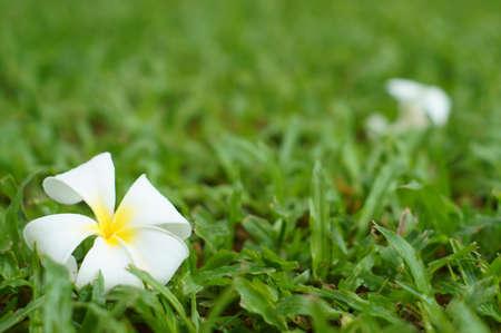 tropical flower on grass field