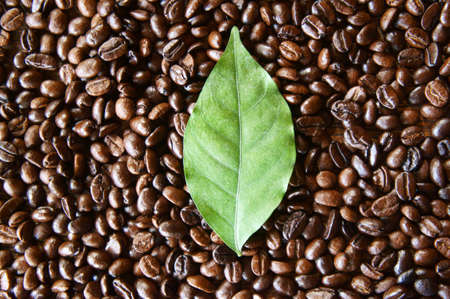 closeup leaf on coffee beans background