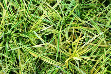 Green grass seamless texture. Stock Photo