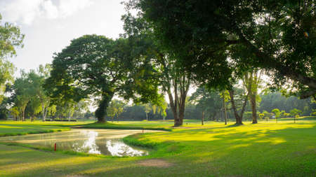 Green park with trees at sunset light.