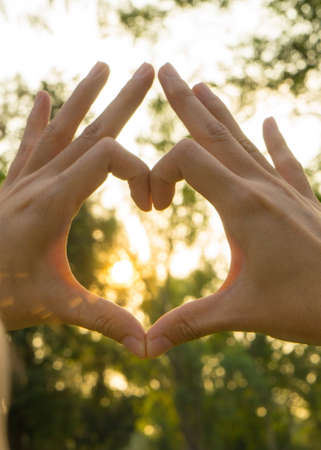 Hands in Heart Shape on Tree and Sunset Background Stock Photo