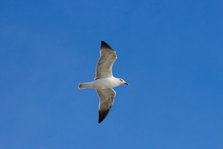 Single seagul in the blue sky take upwards from the angle