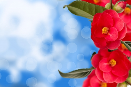 Camelia collage on the right with blue abstract background Stock Photo - 18305225