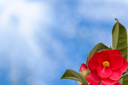 Camelia collage on the right bottom with abstract blue background