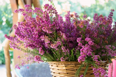 Full basket of purple heather on the table outside.