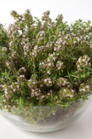 A bunch on thyme in transparent bowl isolated on white background Stock Photo - 20440952