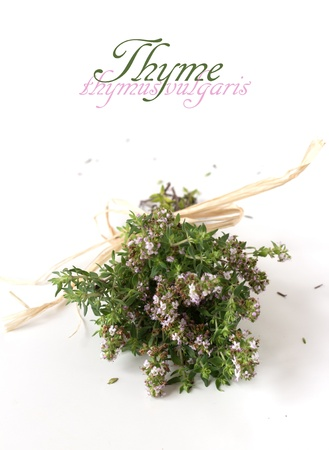 A bunch on thyme with soft pink flowers isolated on white background Stock Photo - 20440932