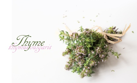 A bunch on thyme with soft pink flowers isolated on white background Stock Photo