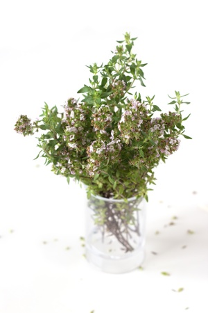 A bunch on thyme in small transparent vase isolated on white background