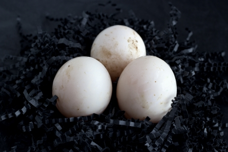 Duck eggs in a paper nest on black background