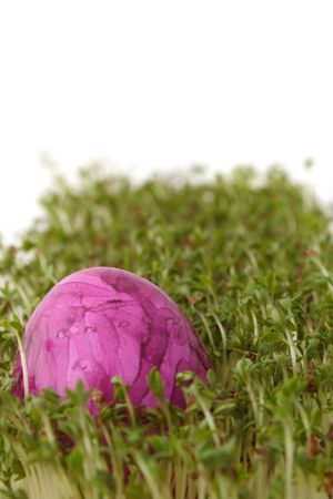 A single painted easter egg lying in fresh garden cress. Stock Photo - 6603052